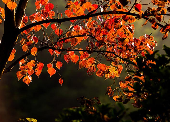 秋日映照四方山