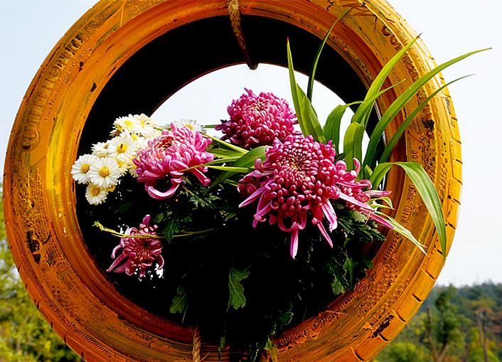 绚丽的菊花