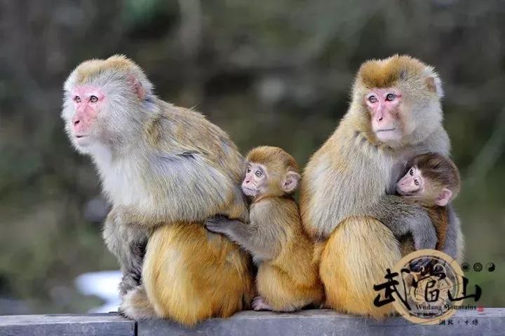 【资讯】武当山十大热门景点,推荐指数5颗星!