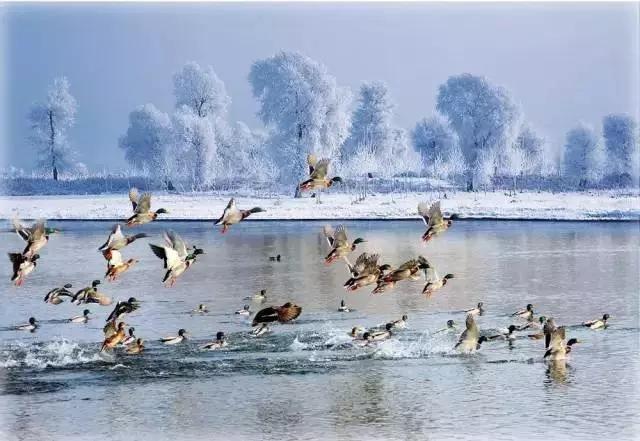 冬季, 到神农架来玩雪
