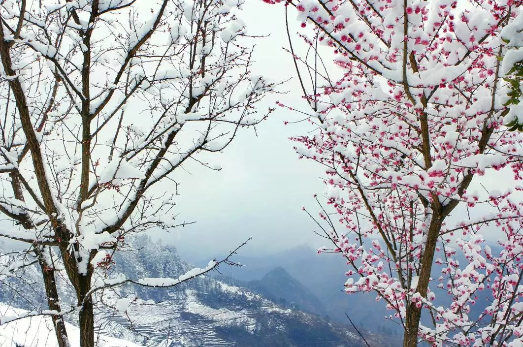 一下雪,竹溪就美成了一幅画