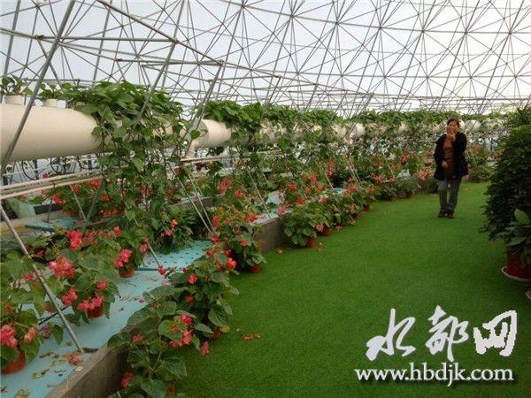 【资讯】习家店镇农博园:寒冬里的盎然春意