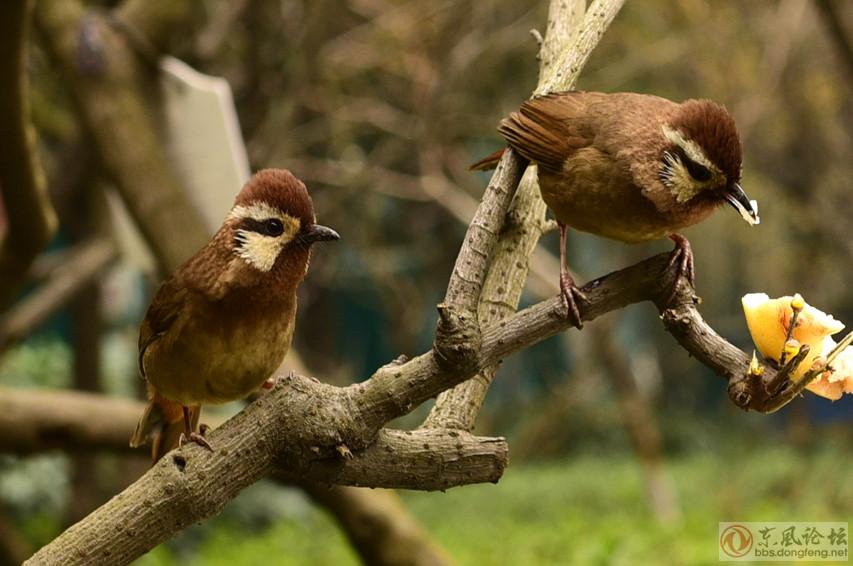 公园里的小鸟