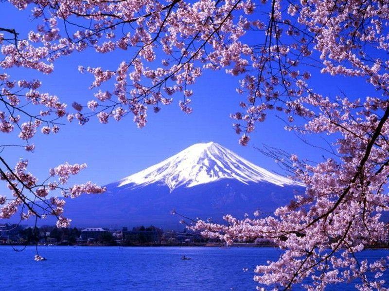 日本本州神户、三古都、伊豆7日游