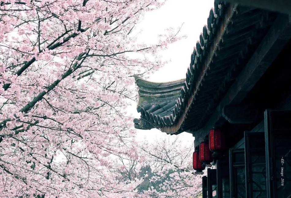 广东樱花山风景区