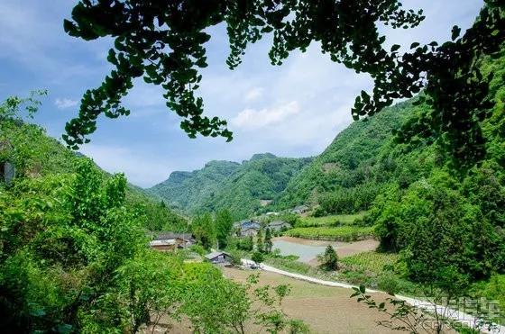 大川镇浪溪河千年古树群景区