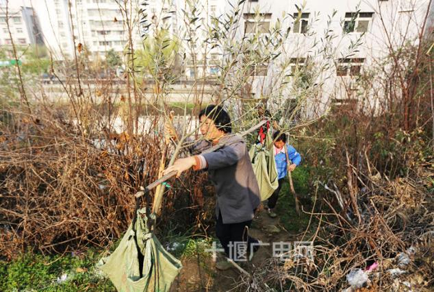武当山掀起春植春造热潮