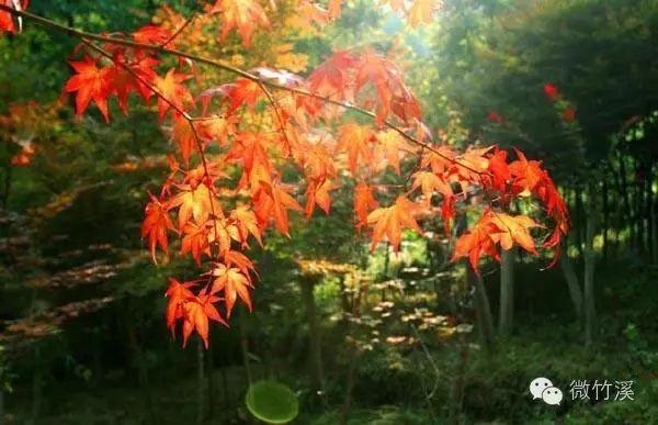 竹溪八卦山林场