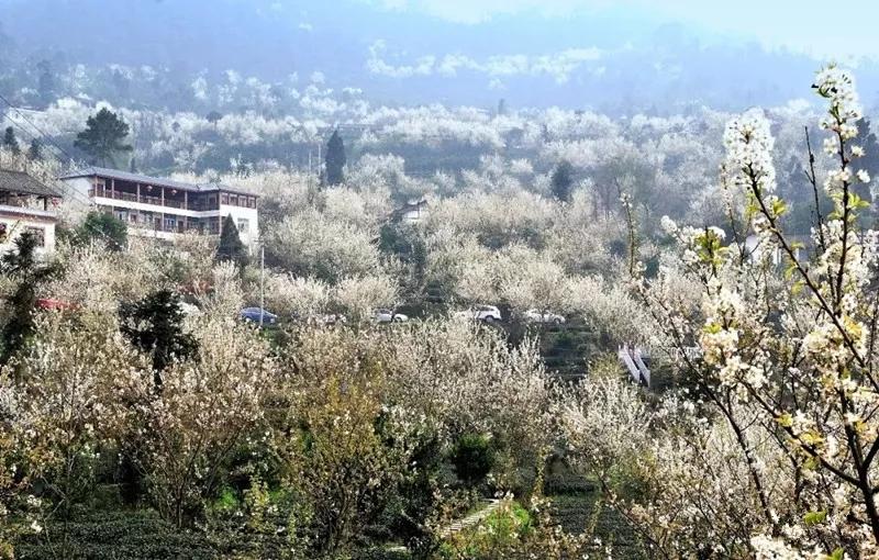 【资讯】又是樱花开满山,房县八里花海美景惊艳十堰