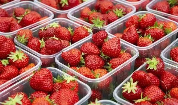 十堰最全草莓采摘地图!周末约起