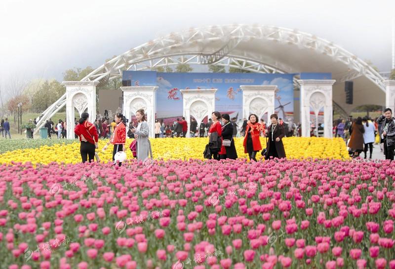 【资讯】十堰郁金香文化旅游节开幕两天接待游客6万人
