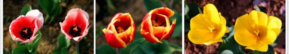 黄龙壹号生态园里的姊妹花