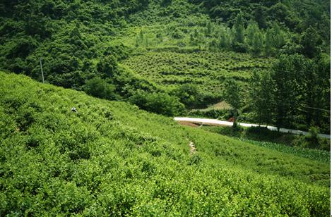 【资讯】十堰将建城区至大川一级公路  投资约7.12亿