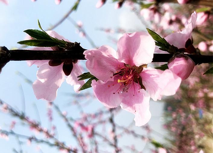 踏青赏花览春色