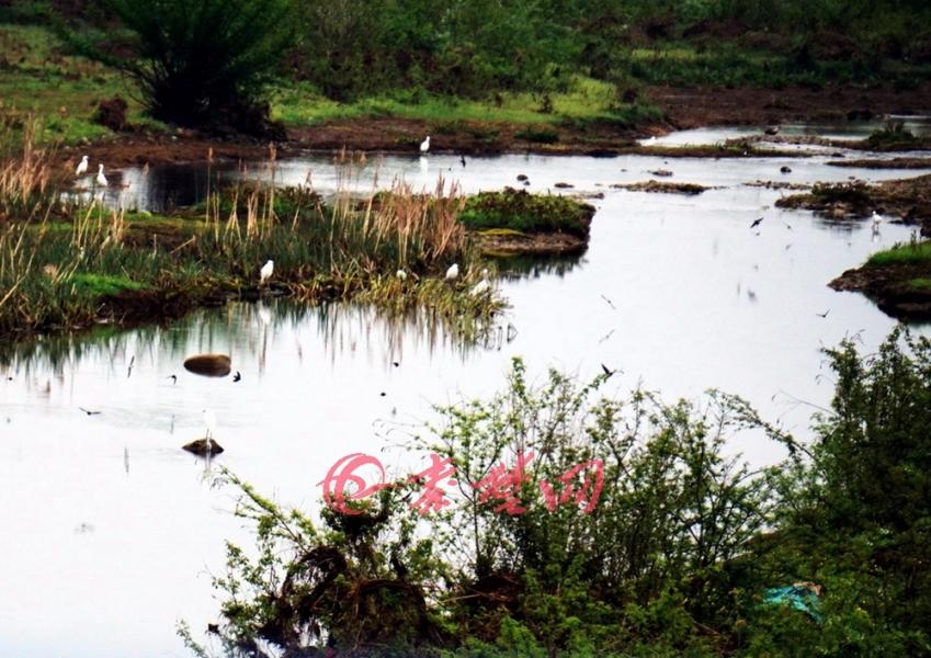 【资讯】大丹江口库区生态变美   水鸟纷纷来安家