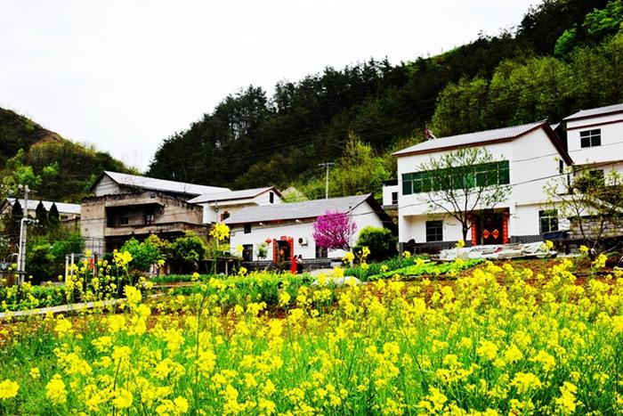 【资讯】五峰乡油菜花节推动当地文化旅游经济发展