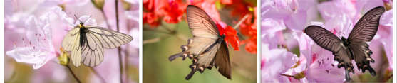 蝴蝶和春天有个约会