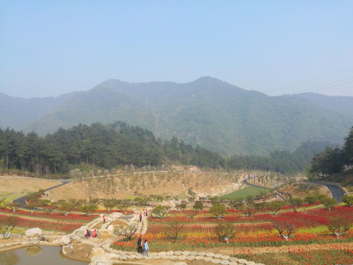 【资讯】茅箭扎实修复生态  确保国家森林城市创建成果
