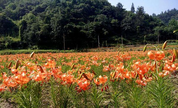张湾区智脑家庭农场