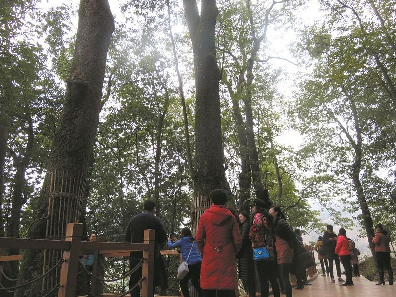 【资讯】春暖花开,竹溪县新洲镇迎来了生态旅游的热潮
