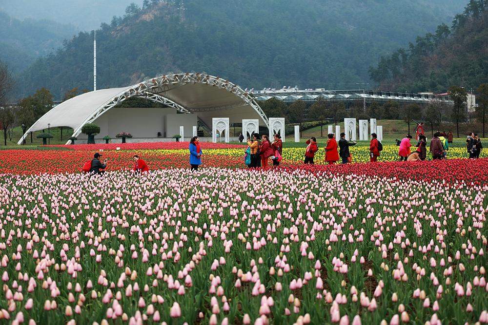 【资讯】张湾区春季旅游市场火热  赏花踏青游唱主角