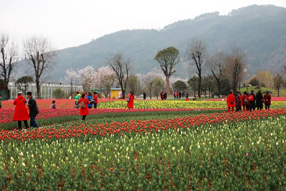 【资讯】赏花游收入占一季度全省旅游收入两成以上