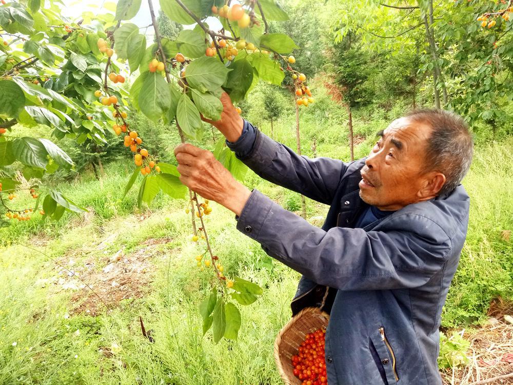【资讯】竹山县大力发展庭院经济助扶贫   扮靓美丽乡村