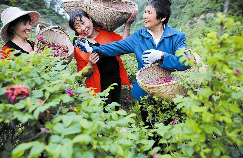天河口玫瑰产业园
