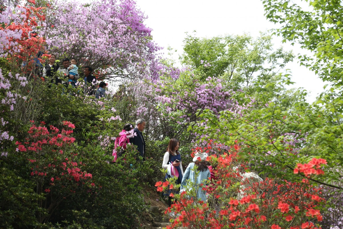 赏花游奏响茅箭旅游春之声