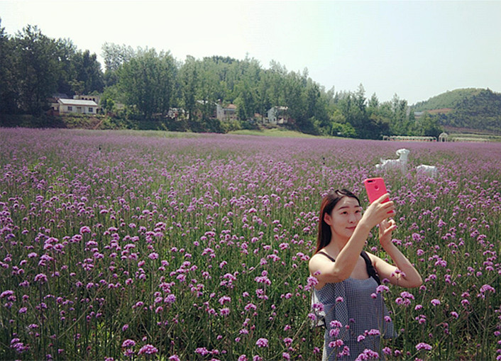 习家店农博园花开正盛