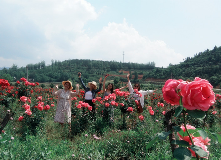 千朵万朵压枝低  花田美景正堪赏