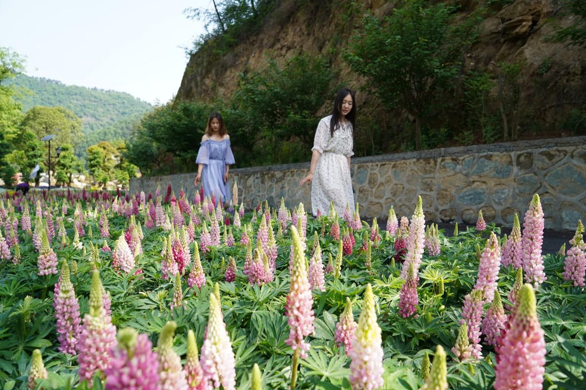 【资讯】免费!半价!2018中国旅游日湖北景区优惠指南