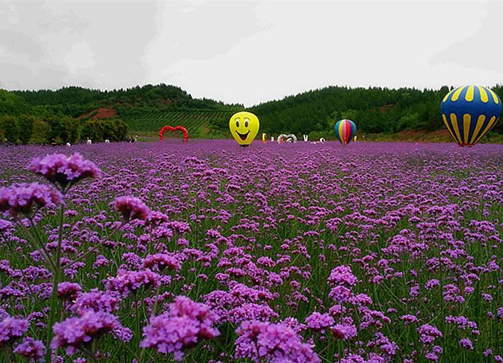 汉江绿谷万紫千红等你来赏