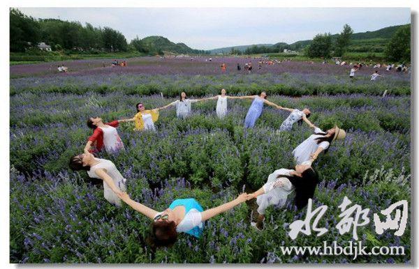 【资讯】习家店镇农博园将举办千人舞动花海活动