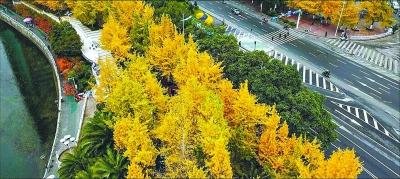 【资讯】长江主轴工程建设启动  景观轴明年10月初形成
