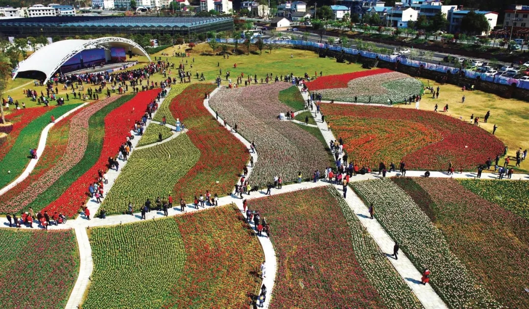 【资讯】赏花研学亲子  张湾这个村的美丽经济进化论