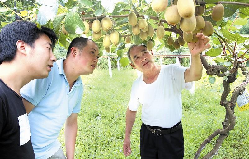 【资讯】张湾西沟乡长坪塘村200亩猕猴桃长势喜人