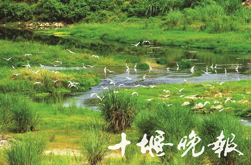 【资讯】美哭!汉江湿地白鹭飞舞,尽显生态美