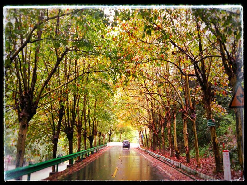初秋的大川,处处都是好颜色