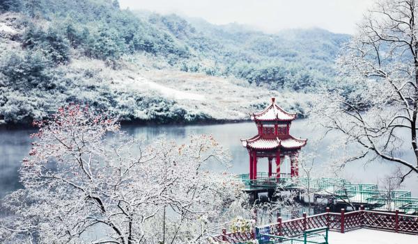 【资讯】太美了!竹溪龙湖湿地迎来候鸟群飞