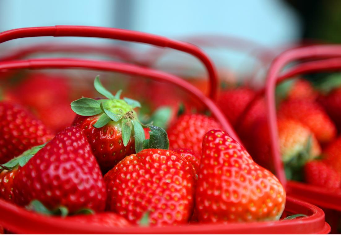 【资讯】丹江口的草莓又红啦,错过又要后悔一年!