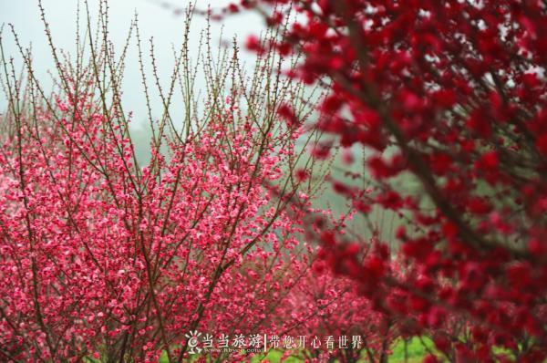 【资讯】好消息!秦巴生态植物园预计本月下旬开园