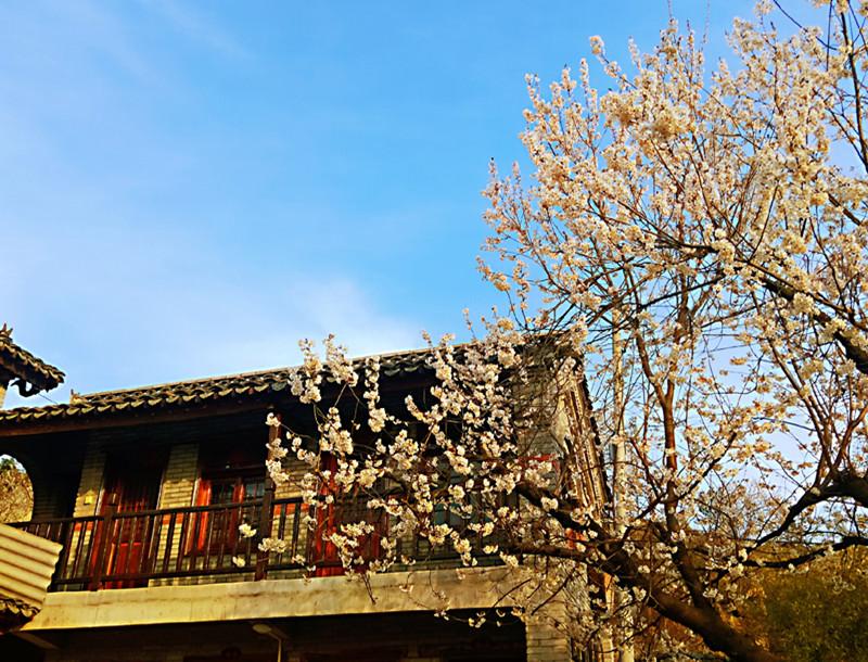 在最美的季节没有错过你——樱桃沟的春天
