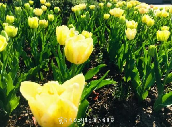 黄龙壹号生态园花开正艳,本周日约起!