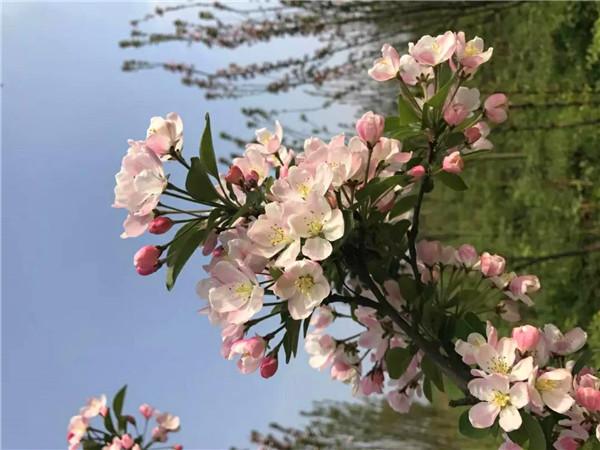 福恩牡丹园喊你来赏花!本周末约起