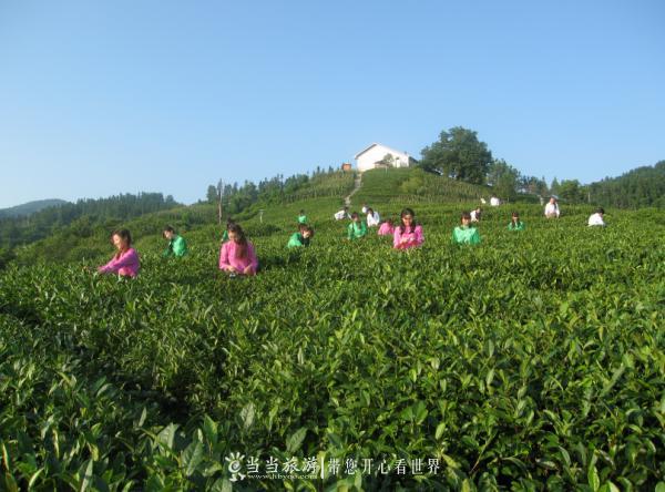 【资讯】4月29日,来竹溪龙王垭共享茶旅盛宴