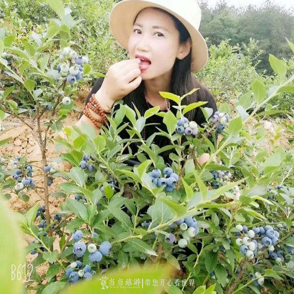 【资讯】蓝莓熟啦!全丹江最好吃的蓝莓就是这里!
