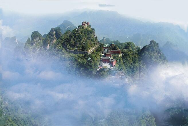 【资讯】神奇!武当山七叶古树揭秘,树龄达2300余年