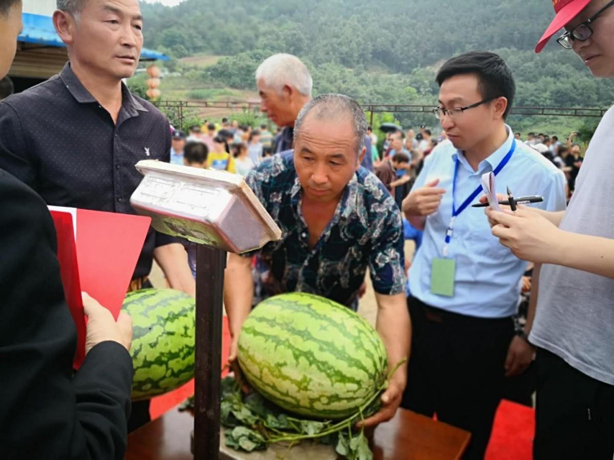 丹江口市龙山镇首届西瓜节开幕  多彩活动喜庆丰收