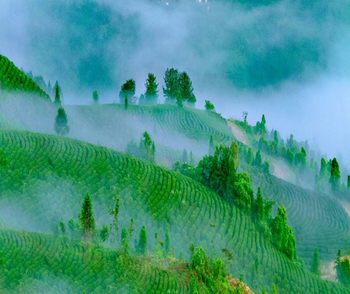 听风听雨,看山品茶,竹溪的雨季有最诗意的景象!